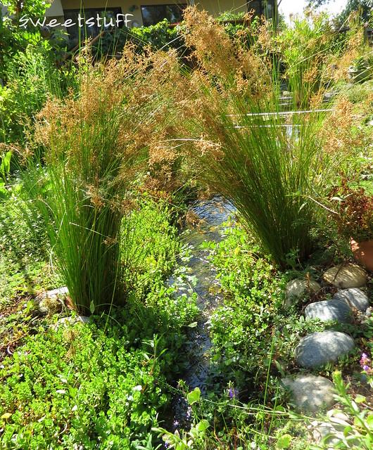Stream in between ponds
