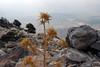 Kreta 2007-2 316