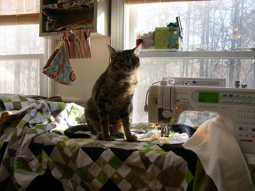 Morelli has feels about quilting