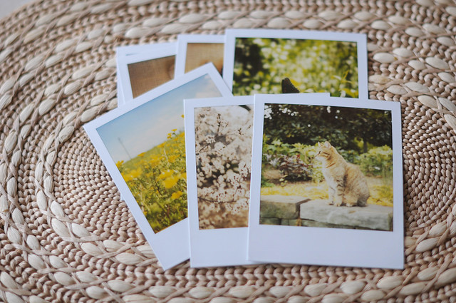 lost and found polaroids
