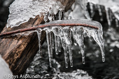 branch, winter, nature, melting, ice, macro photography, monochrome photography, frost, close-up, icicle, iron, monochrome, freezing,
