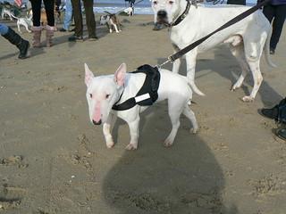 honden tuig hunter