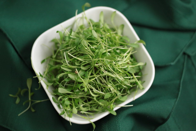 coriander sprouts, what to do with coriander, fresh coriander leaves, coriander sprout recipes, fresh coriander recipes