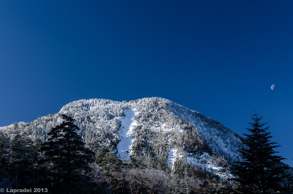 20130203 峰の松目