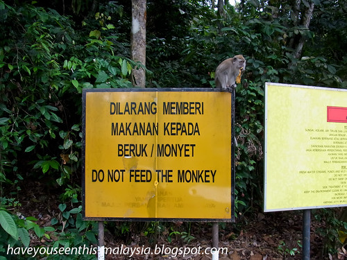 do not feed the monkey R0021543 copy