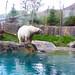 Small photo of Rizzo the Polar Bear