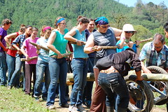 The group in progress of hauling a eucalyptus tree from the forest to the job site