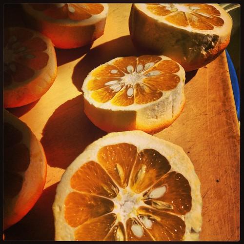 ご近所さんから、今年も貰ったんで、橙酢作り。の手伝い