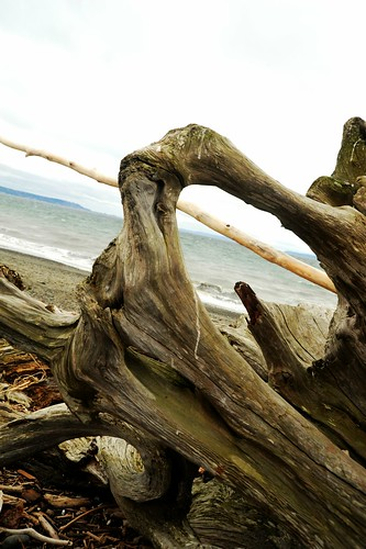 See through driftwood, beach, Puget Sound, waves, overcast sky, Seattle, Washington, USA by Wonderlane