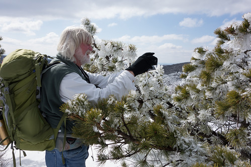 Dave photographing ice on a pitch pine