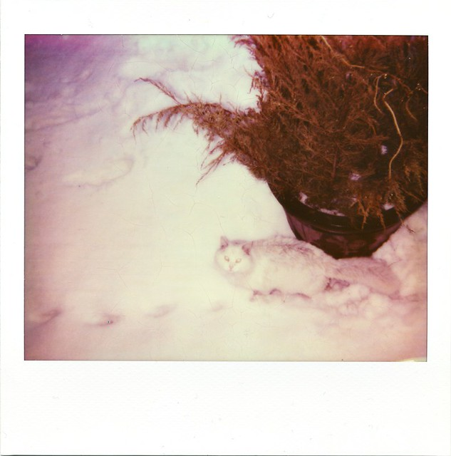 polaroid - Ghosty