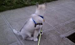 [Scrapbook] Link the Siberian Husky - Page 3 8531046585_9c65e9e708_m