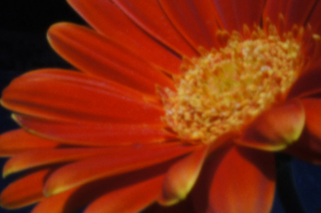 handheld flower shot