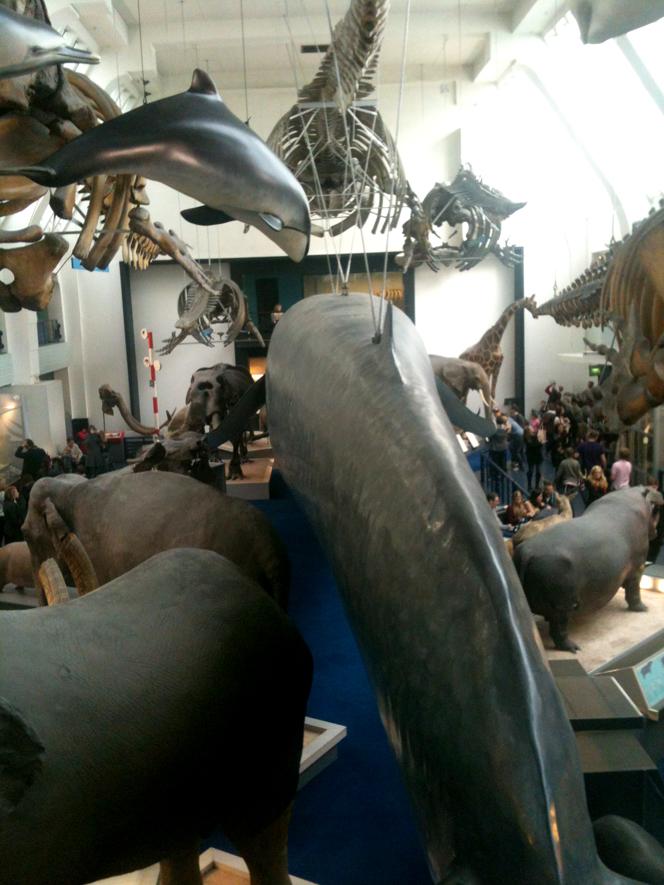 hello_dodo_whales