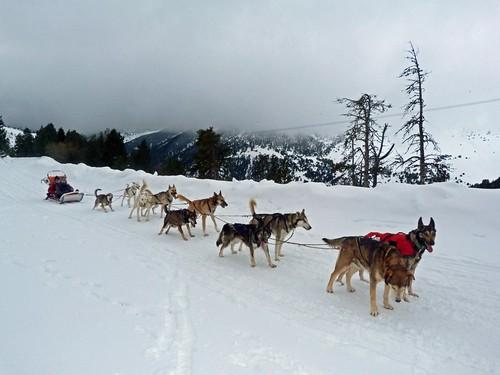 Fotografía del Trineo de perros en Vallnord (Andorra)