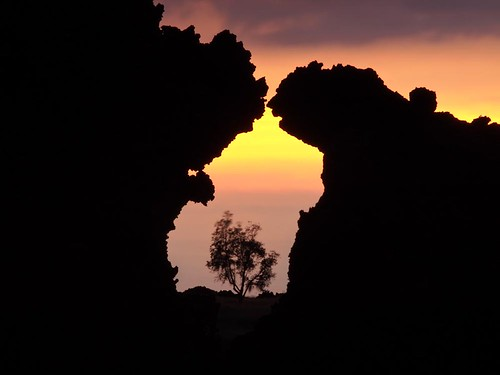 sunset tree art silhouette landscape photography hawaii photo focus exposure bigisland framing barren lavarock fromhereonin christopherjohnson