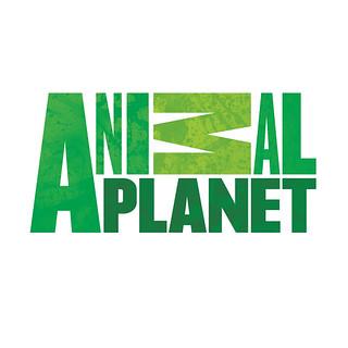 Hình ảnh kênh Animal Planet