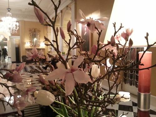 Magnolias Claridge's