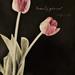 Tulips by Lynnylu