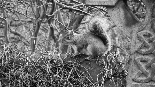 a short chat with a squirrel 01