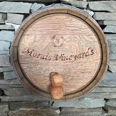 I'm in a vineyard, but I don't get to drink the wine. #wedding #handspuncinema