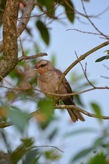 bandit-bird-DSC_0184