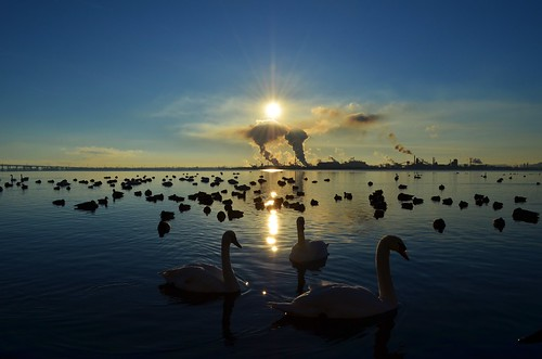morning sun lake ontario canada industry nature water birds burlington geese smog nikon wildlife ducks swans bfg nikonflickraward d5100