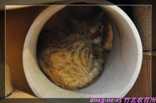 貓 (4)