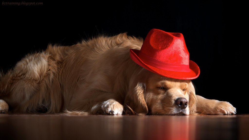 Henry in Hat