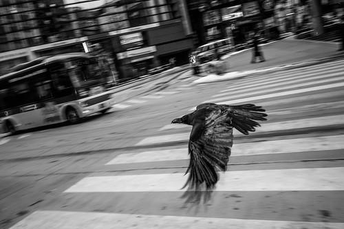 Bird, Shibuya