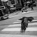Bird, Shibuya by seanbonner