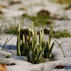První jarní květiny