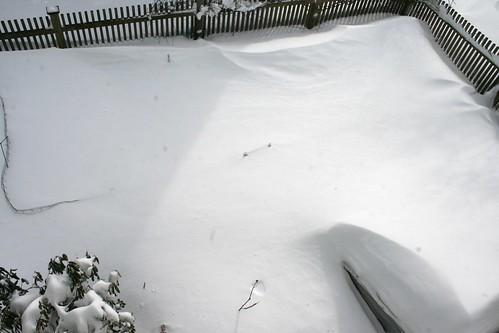 snow covered garden 092