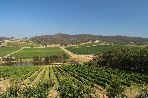 Di Bortoli vines