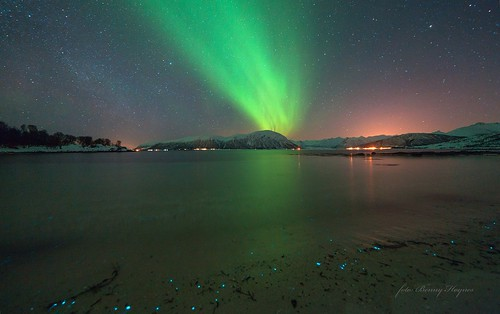 From Stamnes, Sortland, Norway. Auroras, and lightning algaes at the shore, 2013