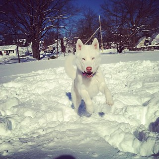 Blue loves the snow!