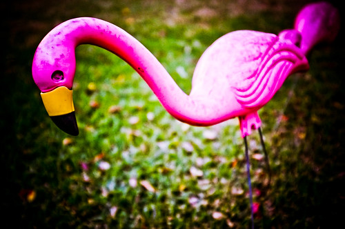 Flamingoes LOVE Croquet Battle Royales 2.16.13 by elawgrrl