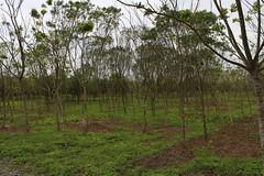 20萬公頃公私有林會隨著林業司保留在農委會嗎?