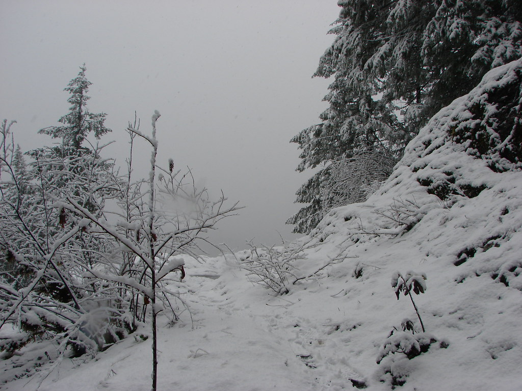 Fresh snow on the Little North Santiam Trail