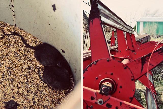 mice // combine