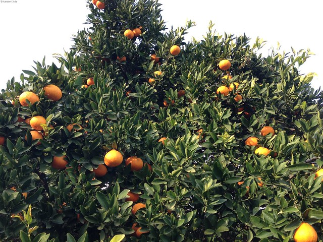 Früchtchen im Orangental