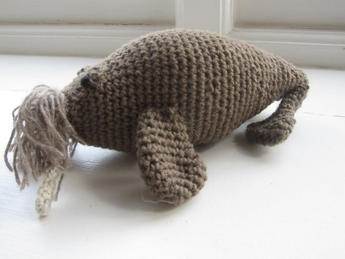 Walrus!!!