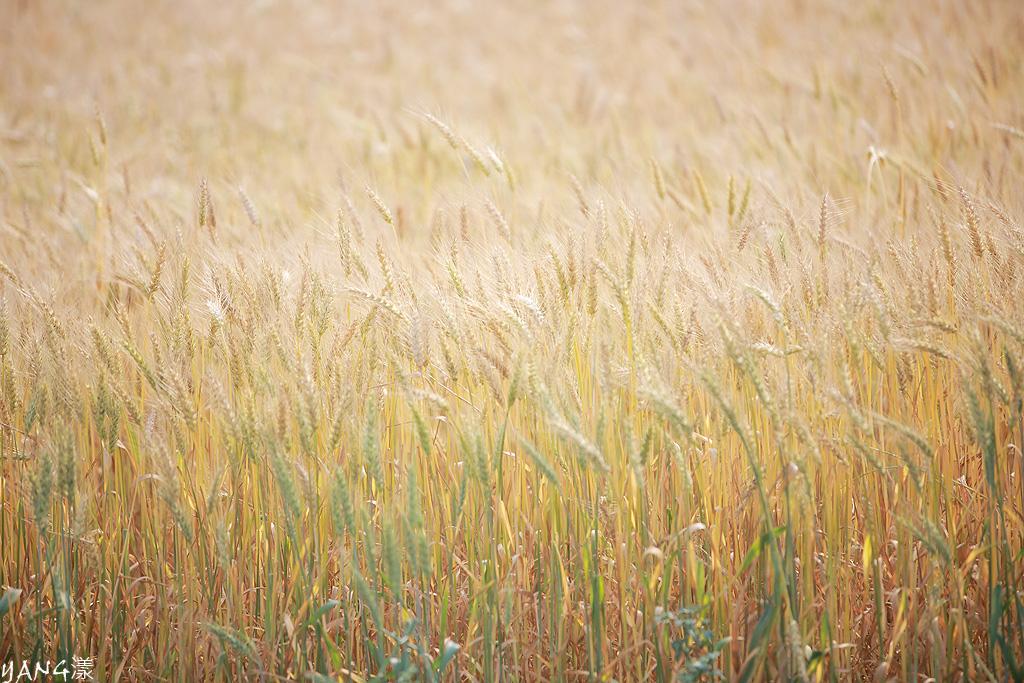 Moony◆麦の匂い