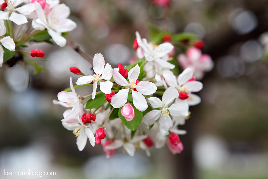 photo of spring blossoms