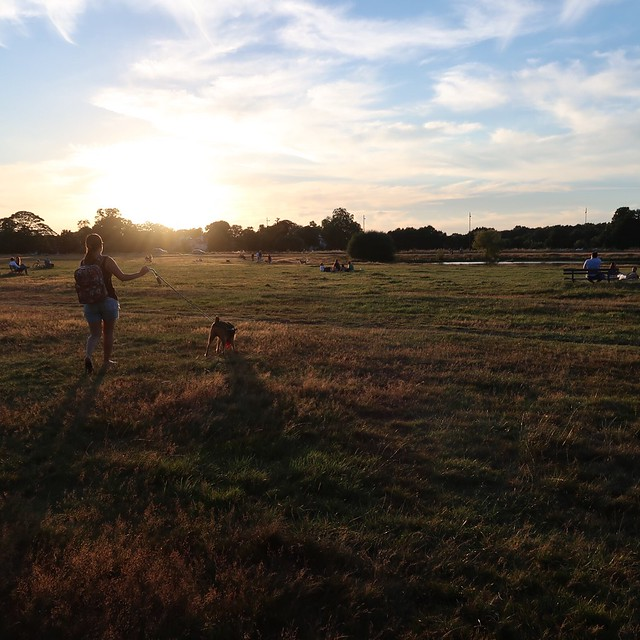 Sunset at the Common.  #uk #london #Wimbledon #wimbledoncommon #sunset #colours #dogs #dogslover #sky #summer #canon #instagood #photography #love