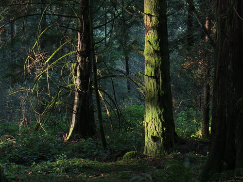 Sun on the mossy trees in Delta Watershed