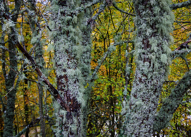 A forest of lichen