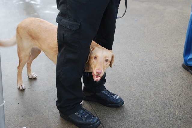 Bomb Sniffing Dog Ny Times Video Artticle