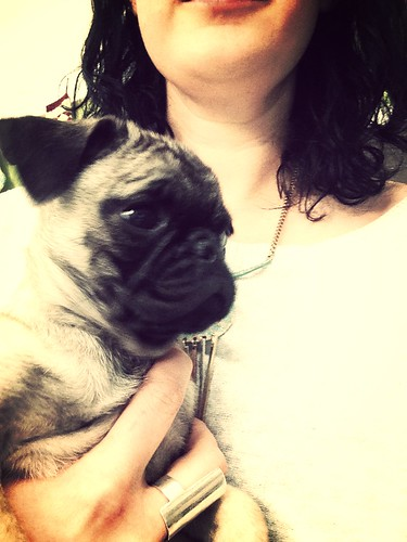 Baby pug #tanglevisitors