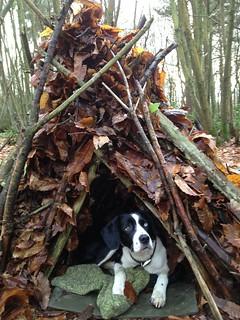 Little Holly brush shelter